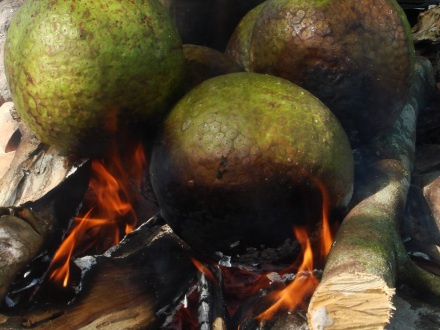 breadfruits being roasted on a wood fire